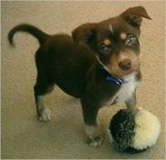 puppy with toy ball